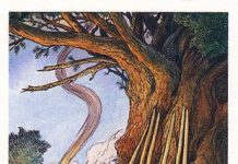 Lá Seven of Bows - Wildwood Tarot