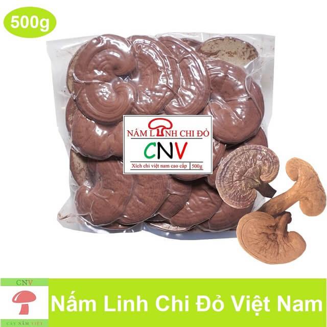 Thông Tin Về Nấm Linh Chi Cây Nấm Việt CNV 1